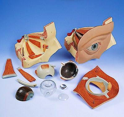 Ojo en Orbita, Modelo de Aula, 12 Partes