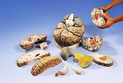Cerebro de Aula, 14 Partes