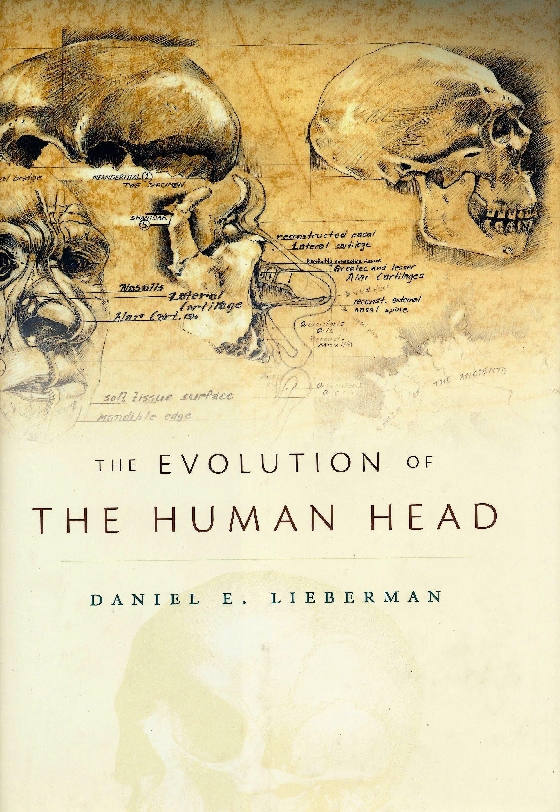 Portada del libro 9780674046368 The Evolution of the Human Head