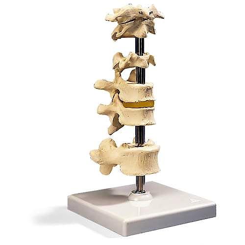 6 Vértebras con Soporte