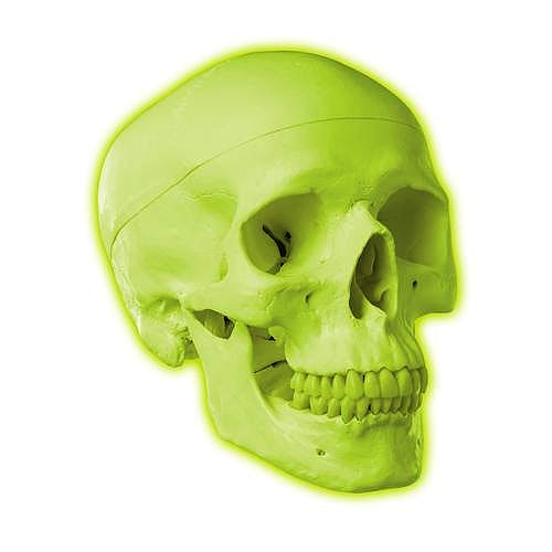 Cráneo de Neón