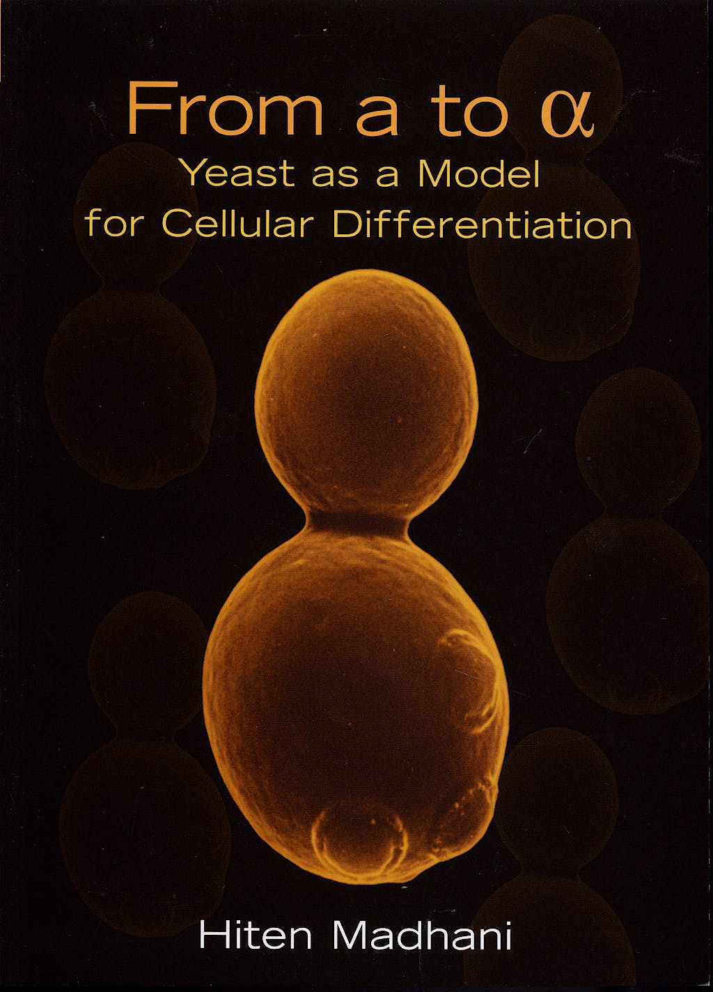 Portada del libro 9780879697389 From a to Alpha. Yeast as a Model for Cellular Differentiation