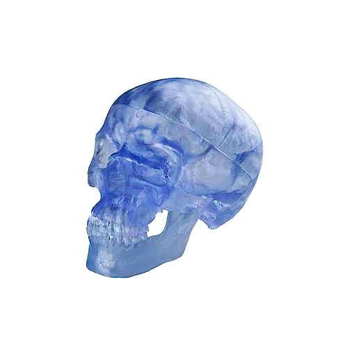 Cráneo Transparente
