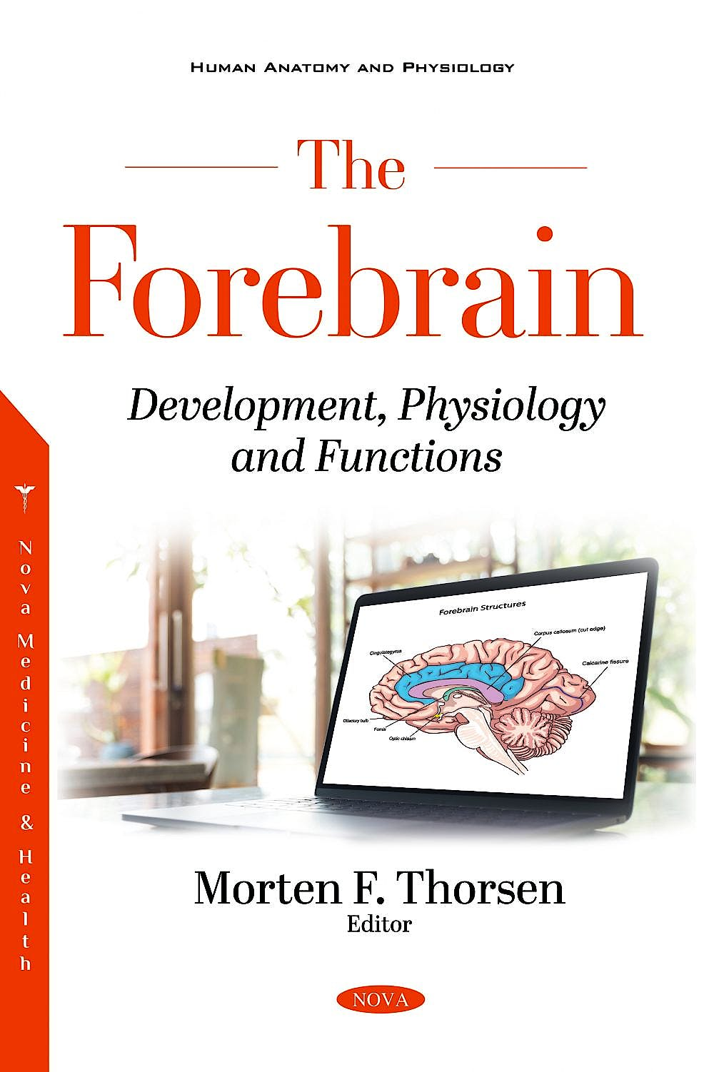 Portada del libro 9781536184075 The Forebrain. Development, Physiology and Functions