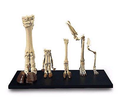 Cuartos traseros diferentes mamíferos