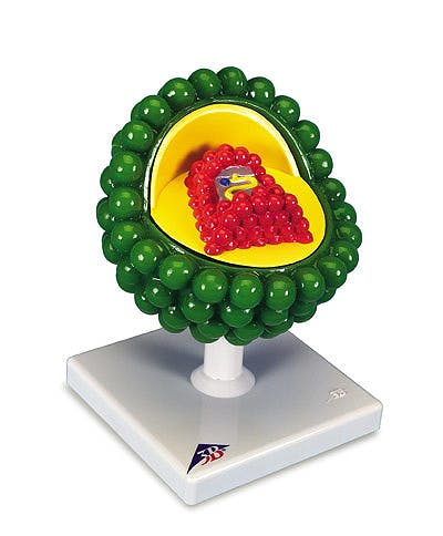 Modelo Virus del Sida