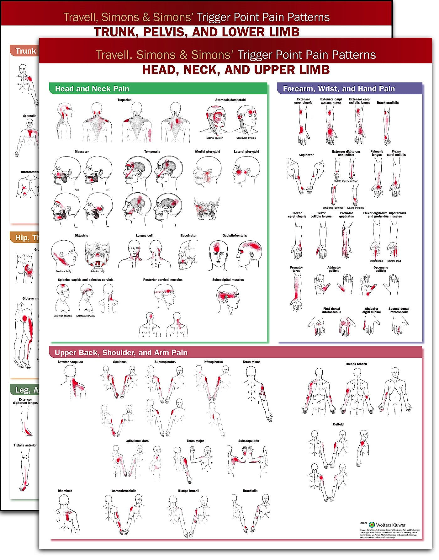 Portada del libro 9781975184353 Travell, Simons & Simons' Trigger Point Pain Patterns Wall Charts Package