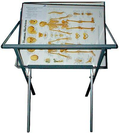 Mostrador de Pie para Guardar Láminas (Incluye 2 Láminas Anatómicas con Ribete Plastificado para Soporte)