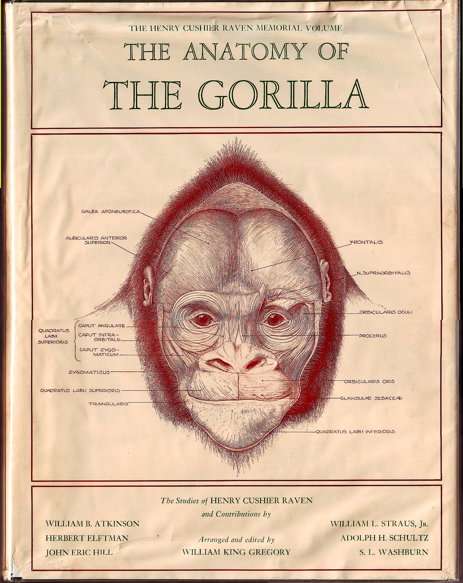 Portada del libro 9783404160327 Anatomy of the Gorilla (The Henry Cushier Raven Memorial Volume)