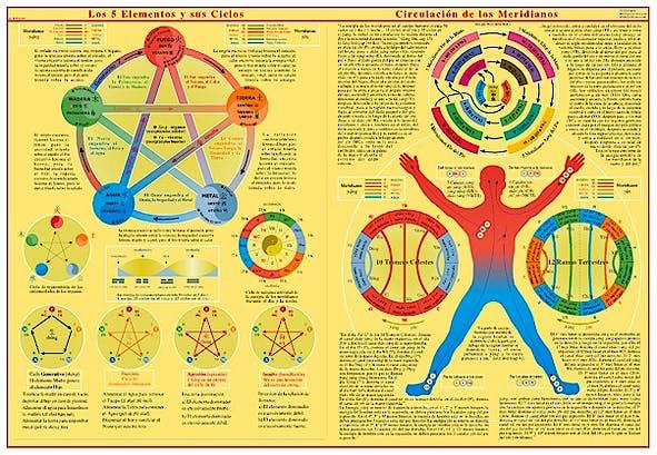 Lámina los 5 Elementos y sus Ciclos, Circulación de los Meridianos, 35 X 50 cm., Plastificada Brillo