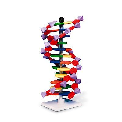 Modelo de Hélice de ADN, Kit de MiniADN, 12 Segmentos