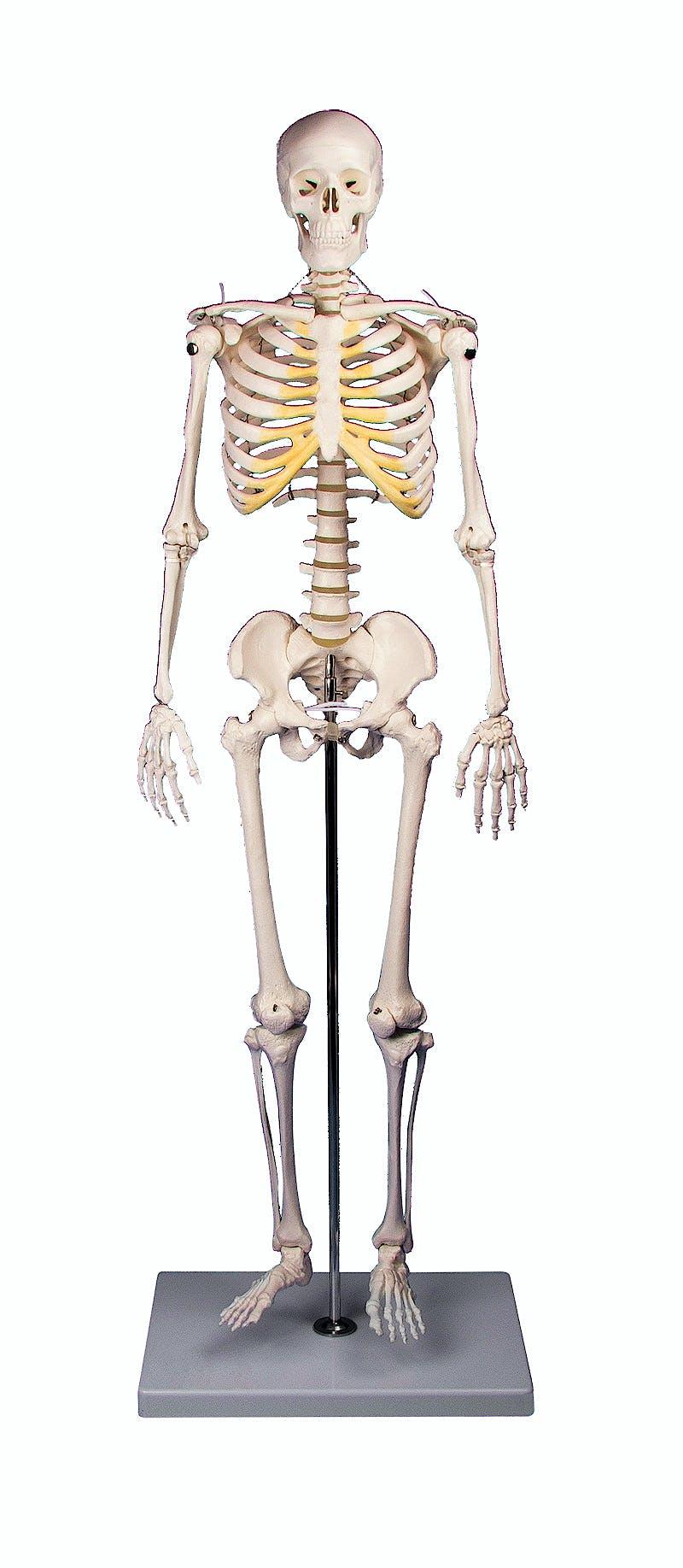 "Mini Esqueleto ""Tom"""