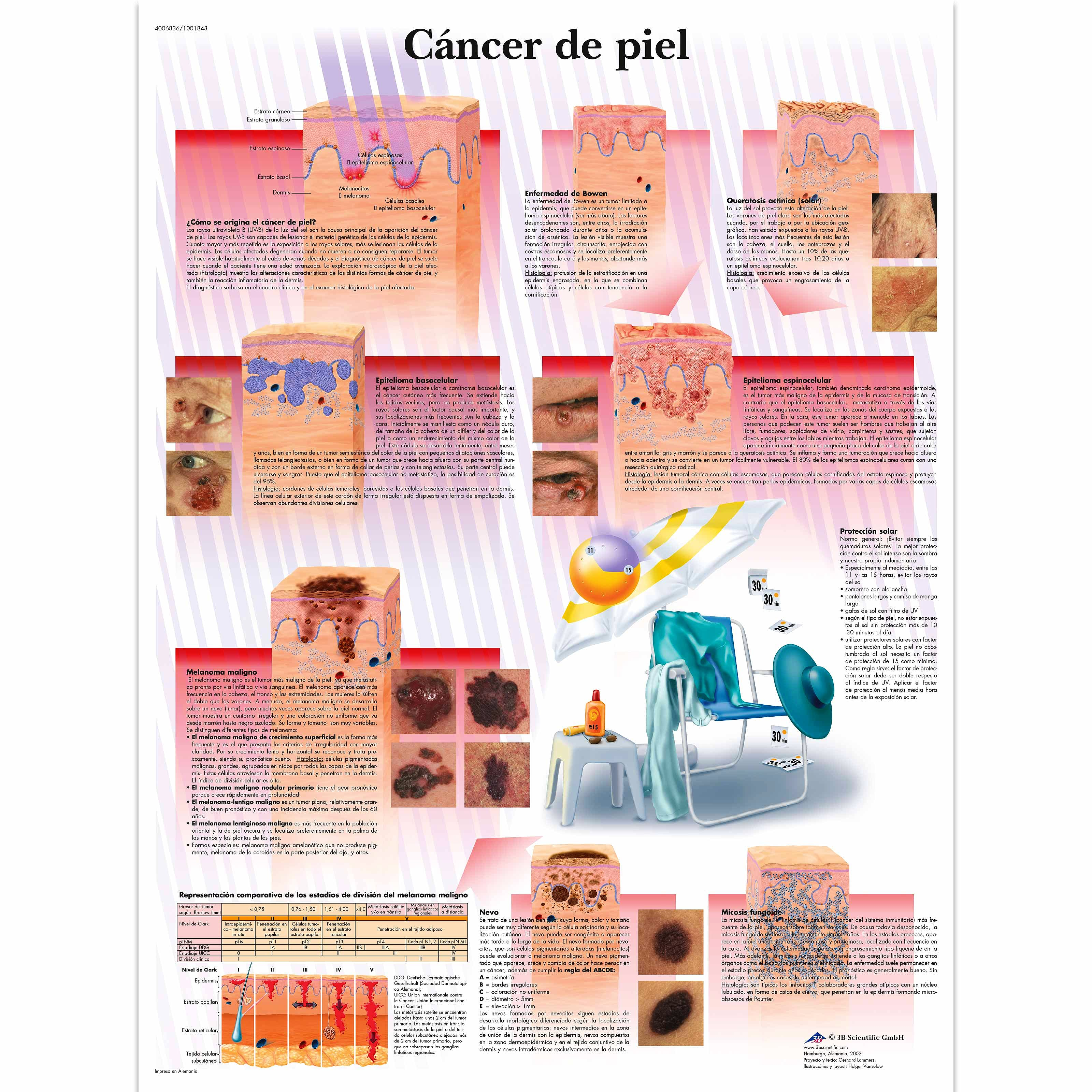 Lamina Cancer de Piel (formato 50 x 67 cm)