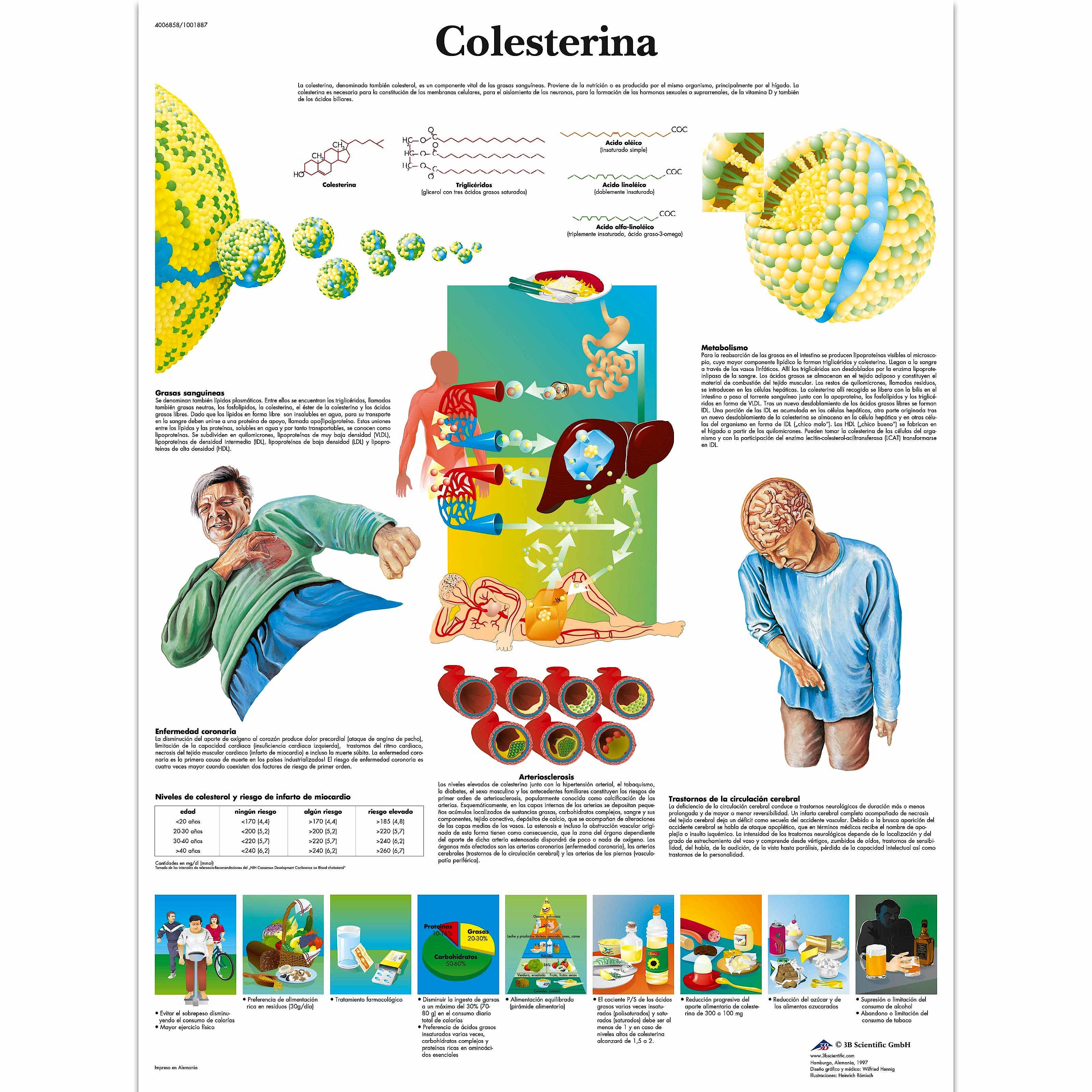 Lamina Colesterina (formato 50 x 67 cm)