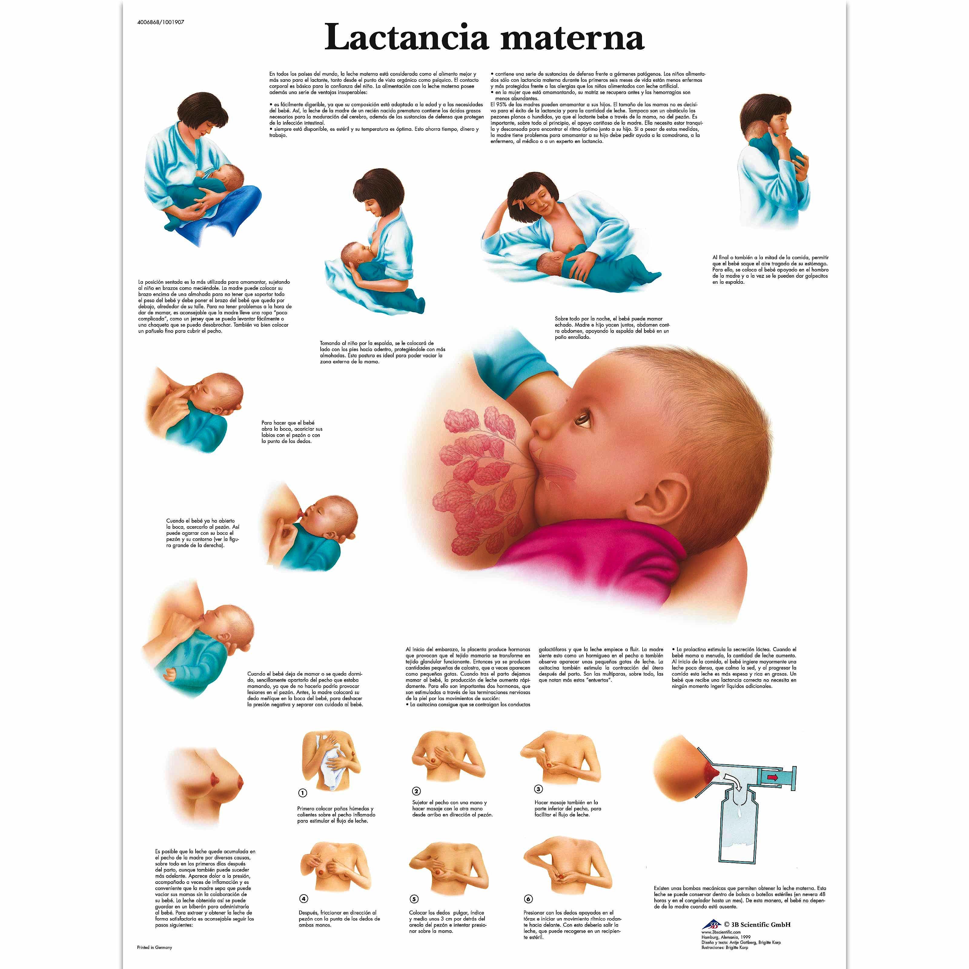Lámina la Lactancia Materna (formato 50 x 67 cm)