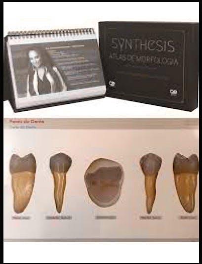 Portada del libro 9788578891473 Synthesis Atlas de Morfología (Edición en Español y Portugués)