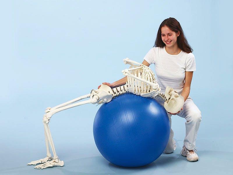 """Esqueleto con Columna Vertebral Móvil """"Hugo"""""""